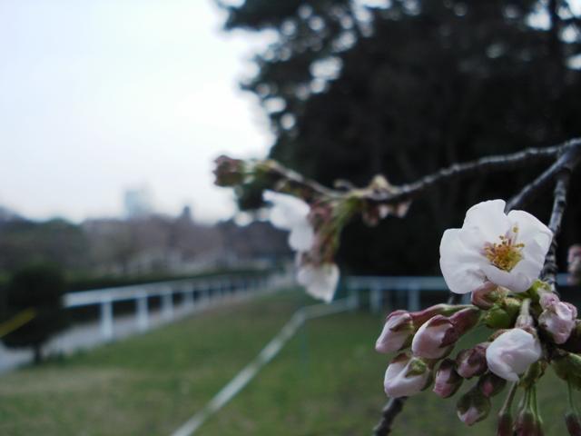Sakura08032304_2
