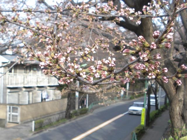 Sakura08032305_2