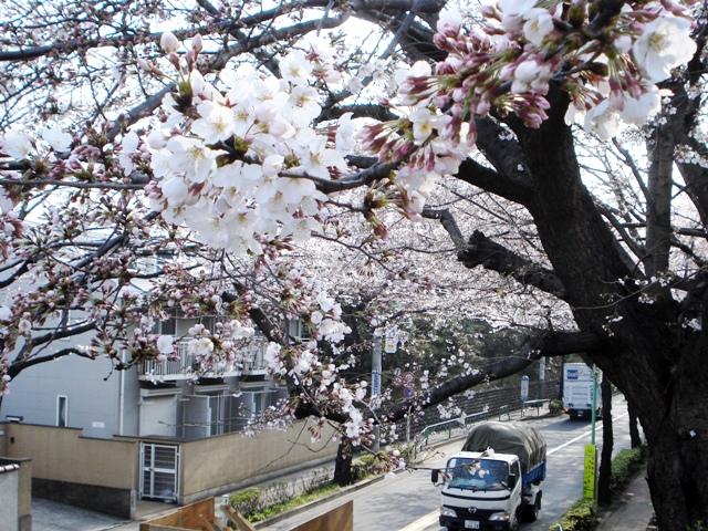Sakura08032601