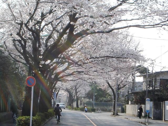 Sakura08032603