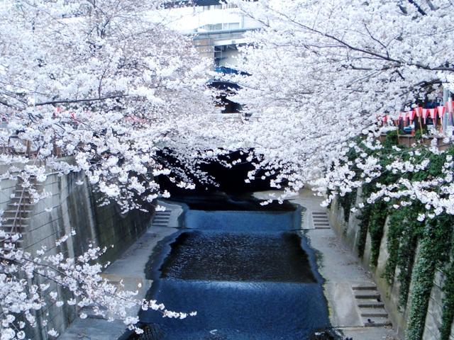 Sakura08032704