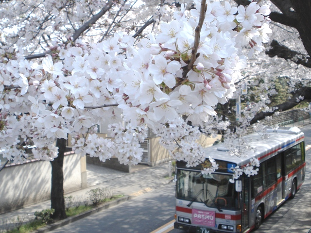Sakura08032801