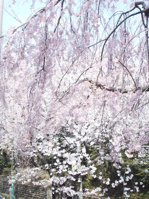 Sakura08032802